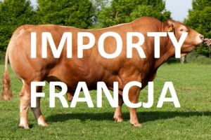 LIMOUSINE /import FR/