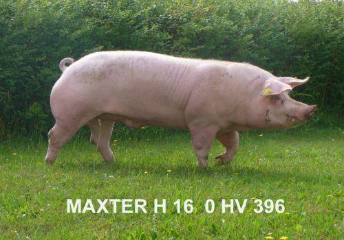 MAXTER Z KLECZY DOLNEJ 0 HV 396