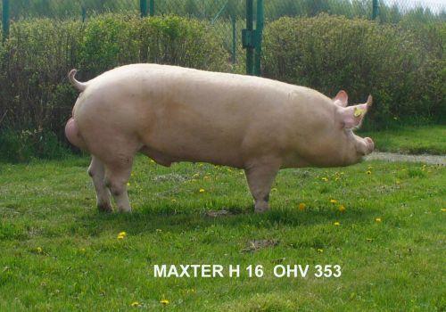 MAXTER Z KLECZY DOLNEJ 0 HV 353